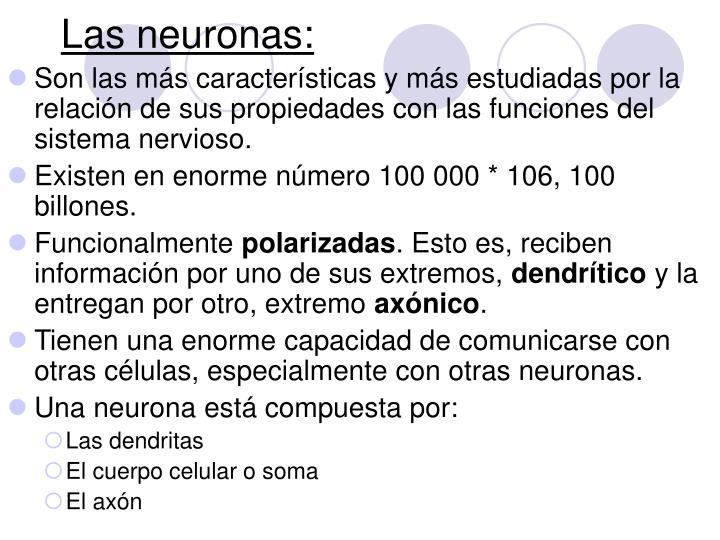 Las neuronas: