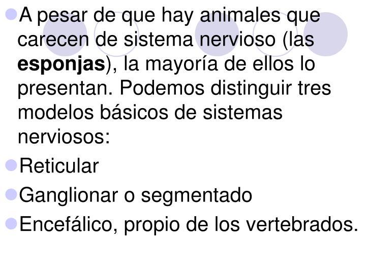A pesar de que hay animales que carecen de sistema nervioso (las