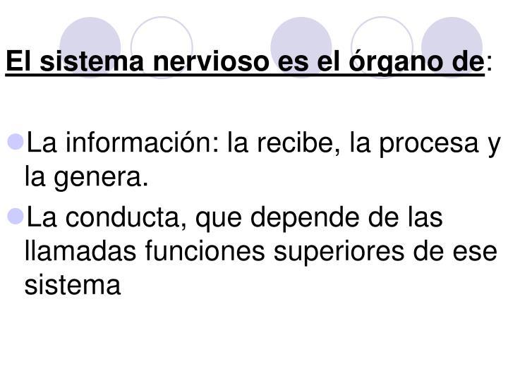 El sistema nervioso es el órgano de