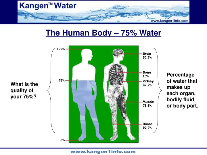 The Human Body – 75% Water