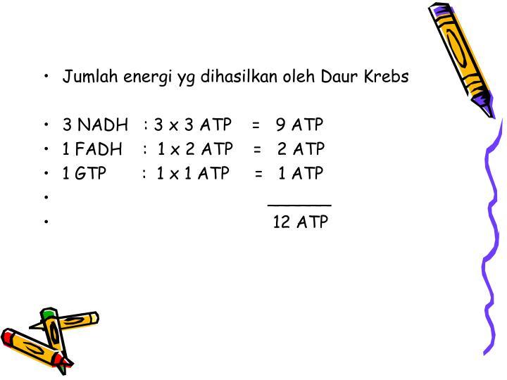 Jumlah energi yg dihasilkan oleh Daur Krebs