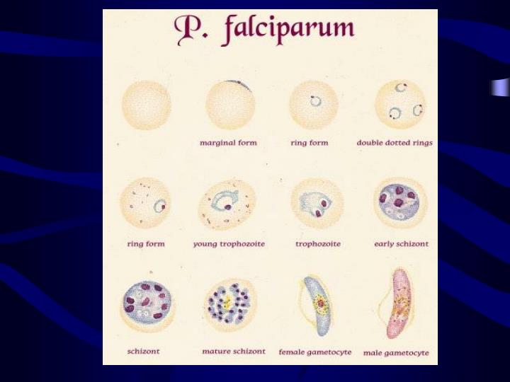 Medical parasitology