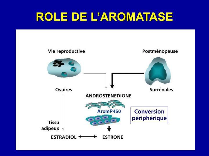 ROLE DE L'AROMATASE