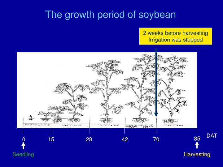 The growth period of soybean