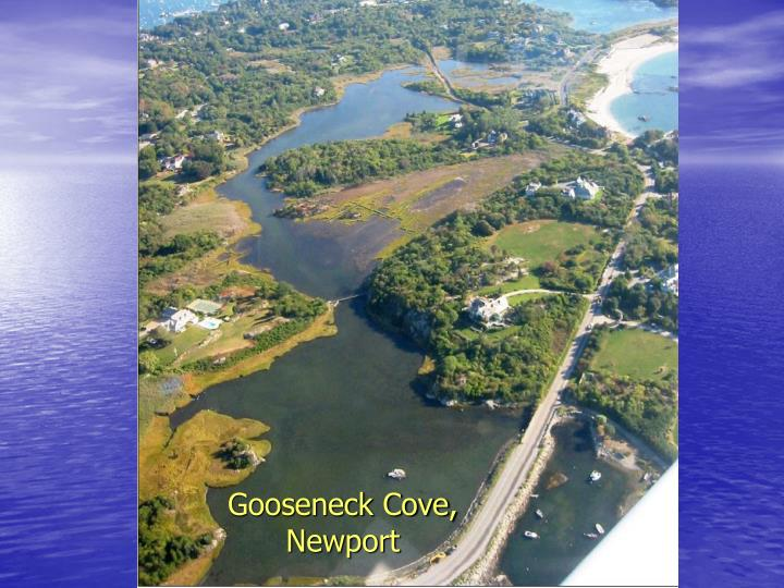 Gooseneck Cove, Newport