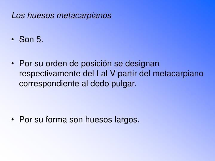 Los huesos metacarpianos