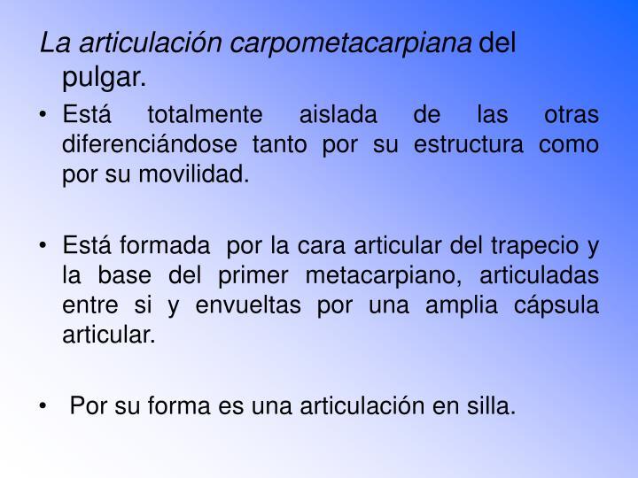 La articulación carpometacarpiana