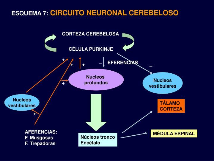 ESQUEMA 7: