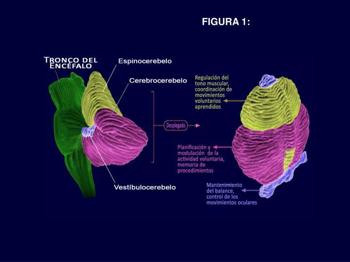 FIGURA 1: