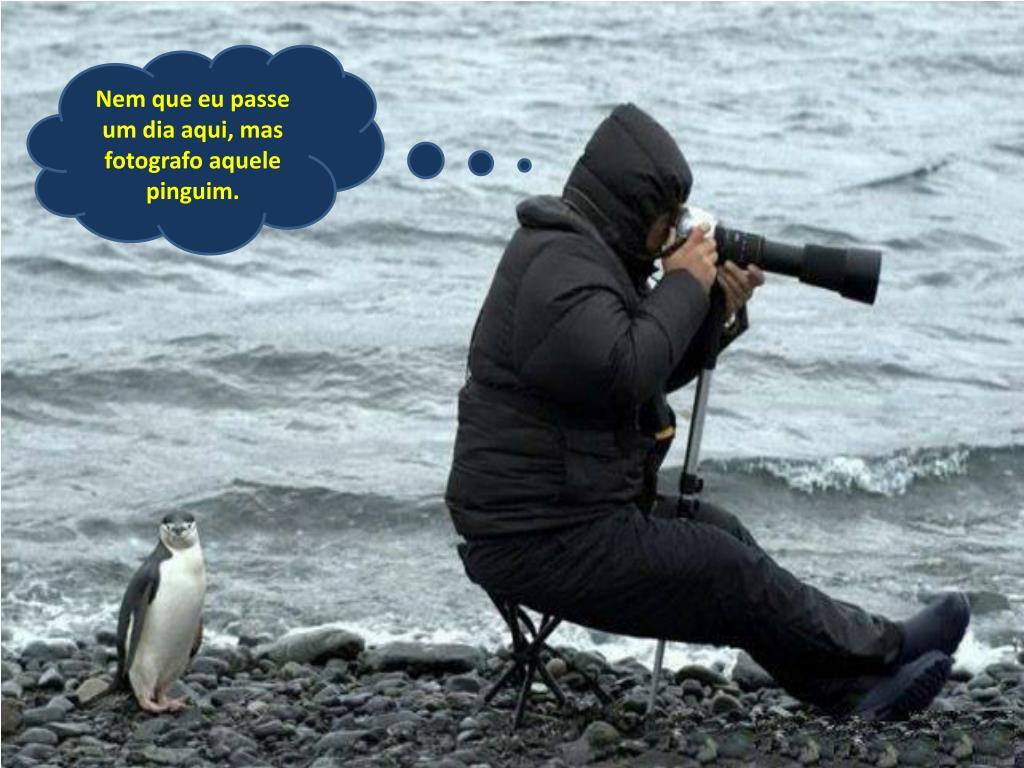 Nem que eu passe um dia aqui, mas fotografo aquele pinguim.