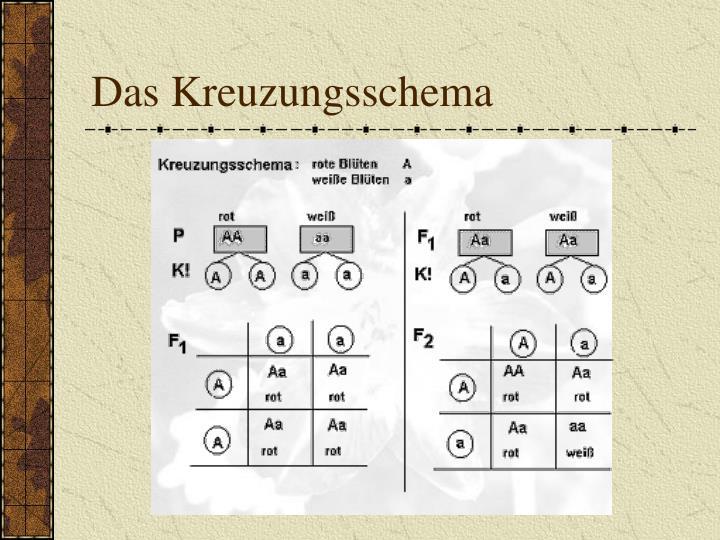 Das Kreuzungsschema