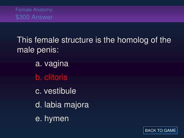 Female Anatomy:
