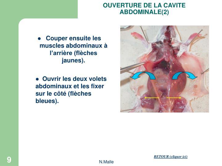 OUVERTURE DE LA CAVITE ABDOMINALE(2)