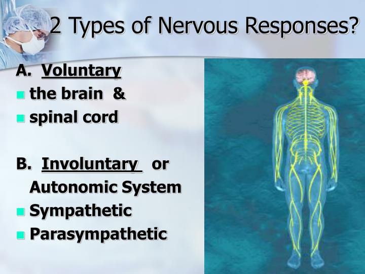 2 Types of Nervous Responses?