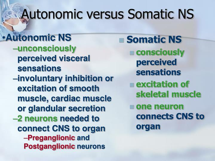 Autonomic versus Somatic NS
