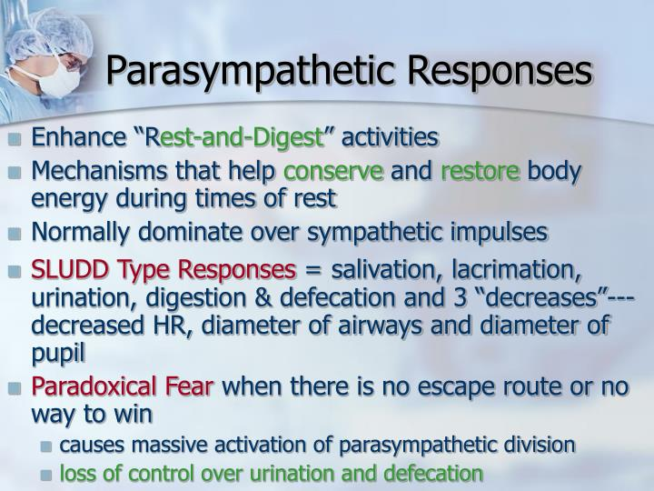Parasympathetic Responses