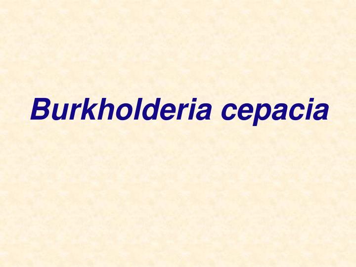 Burkholderia cepacia