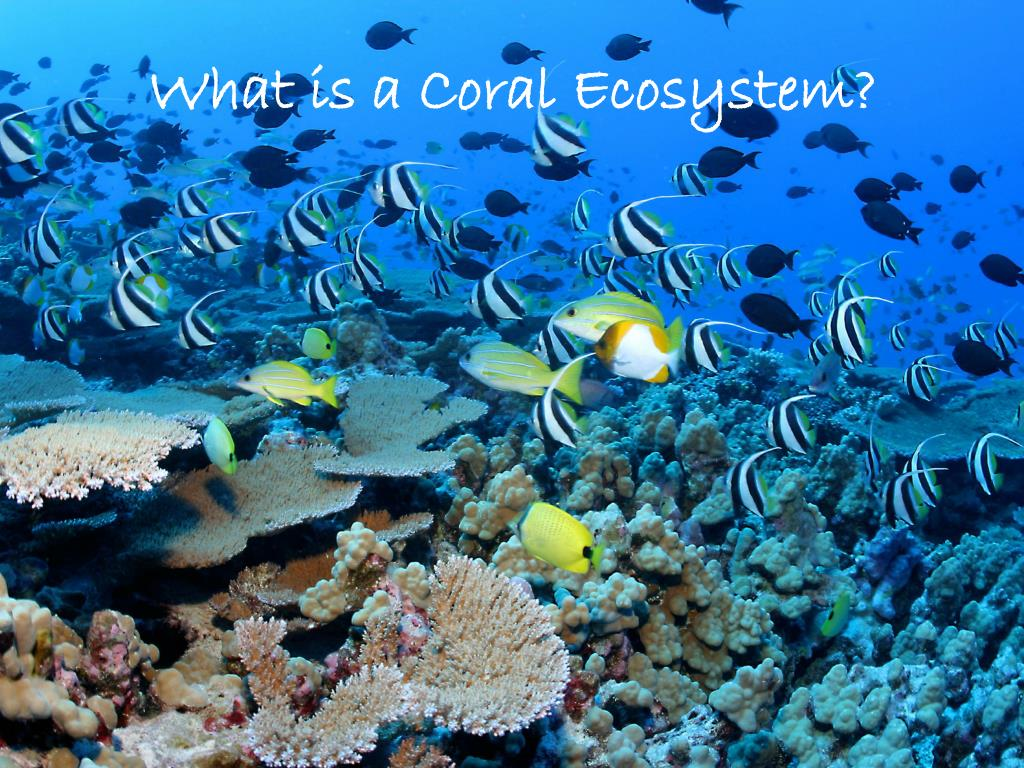 What is a Coral Ecosystem?