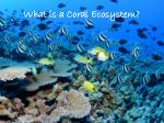 what is a coral ecosystem