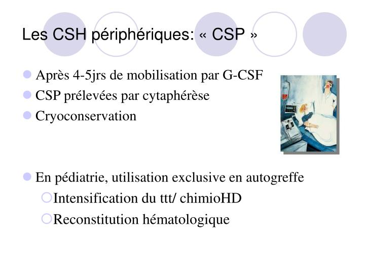 Les CSH périphériques: «CSP»