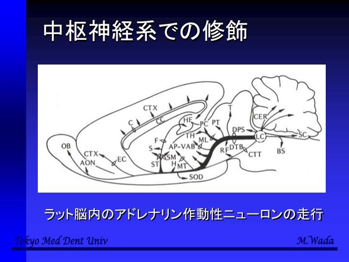中枢神経系での修飾