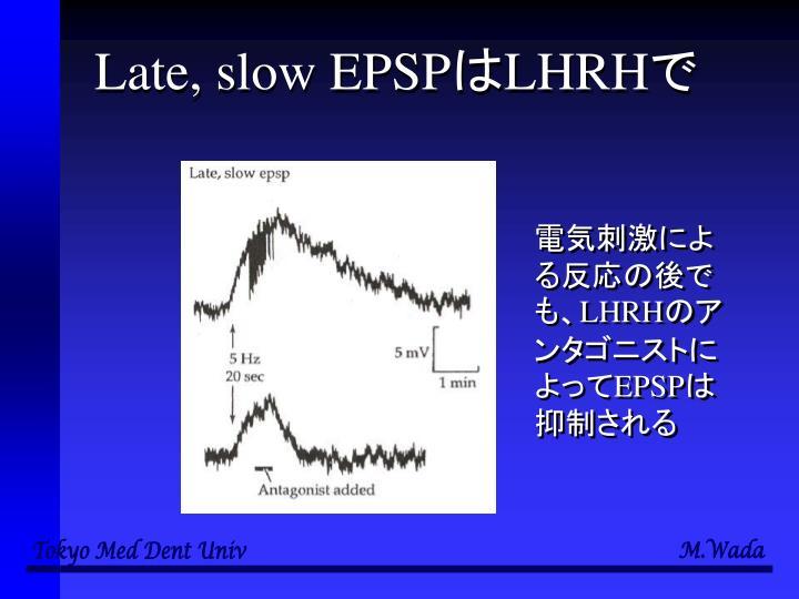 Late, slow EPSP