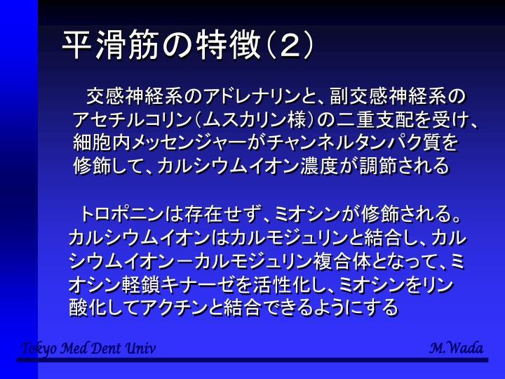 平滑筋の特徴(2)