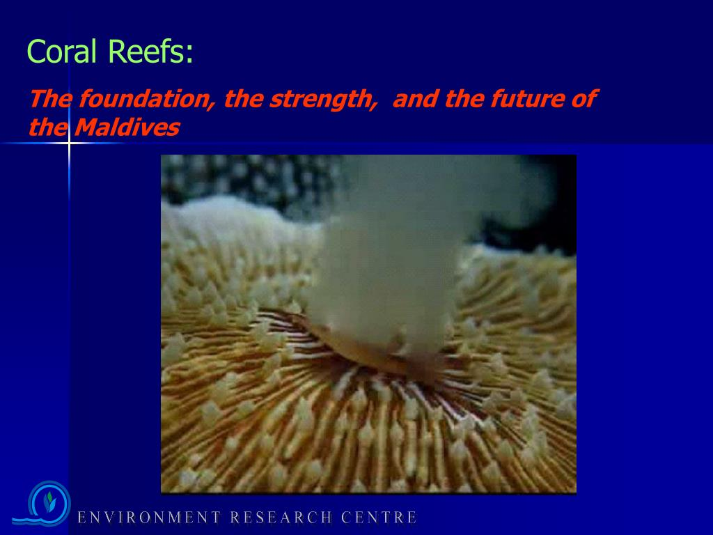 Coral Reefs: