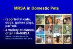 mrsa in domestic pets