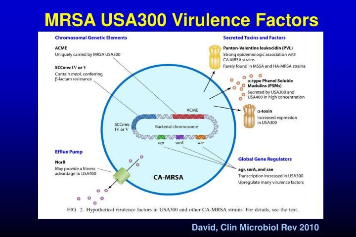 MRSA USA300 Virulence Factors