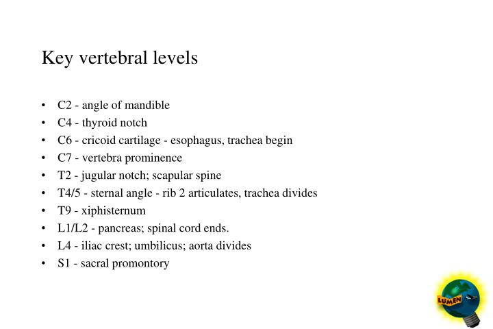 Key vertebral levels