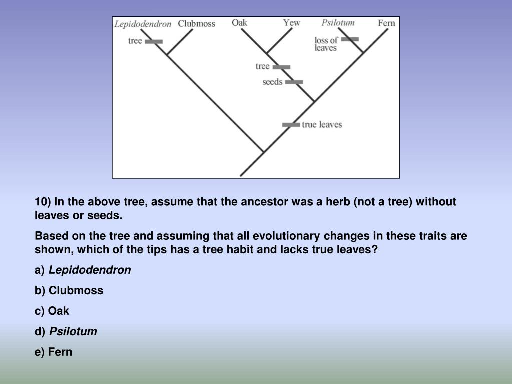 10) In the above tree, assume that the ancestor was a herb (not a tree) without leaves or seeds.