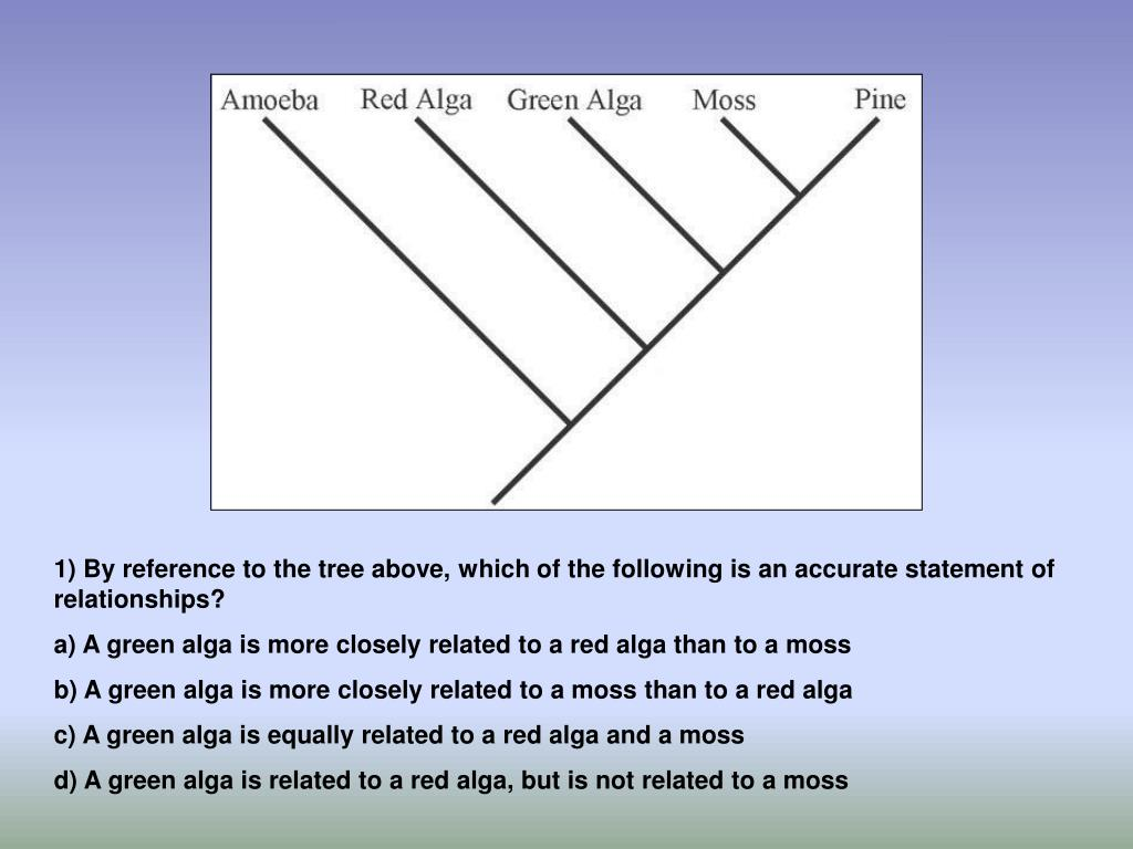 1) By reference to the tree above, which of the following is an accurate statement of relationships?