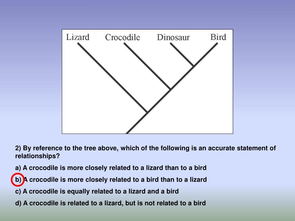 2) By reference to the tree above, which of the following is an accurate statement of relationships?