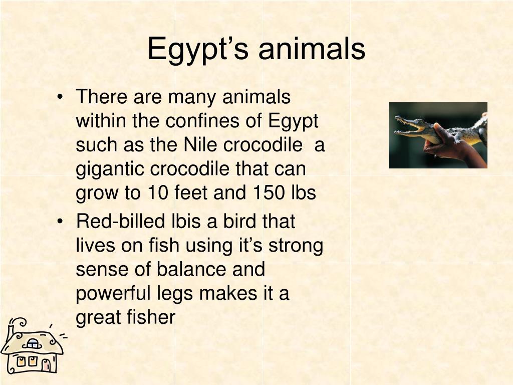 Egypt's animals