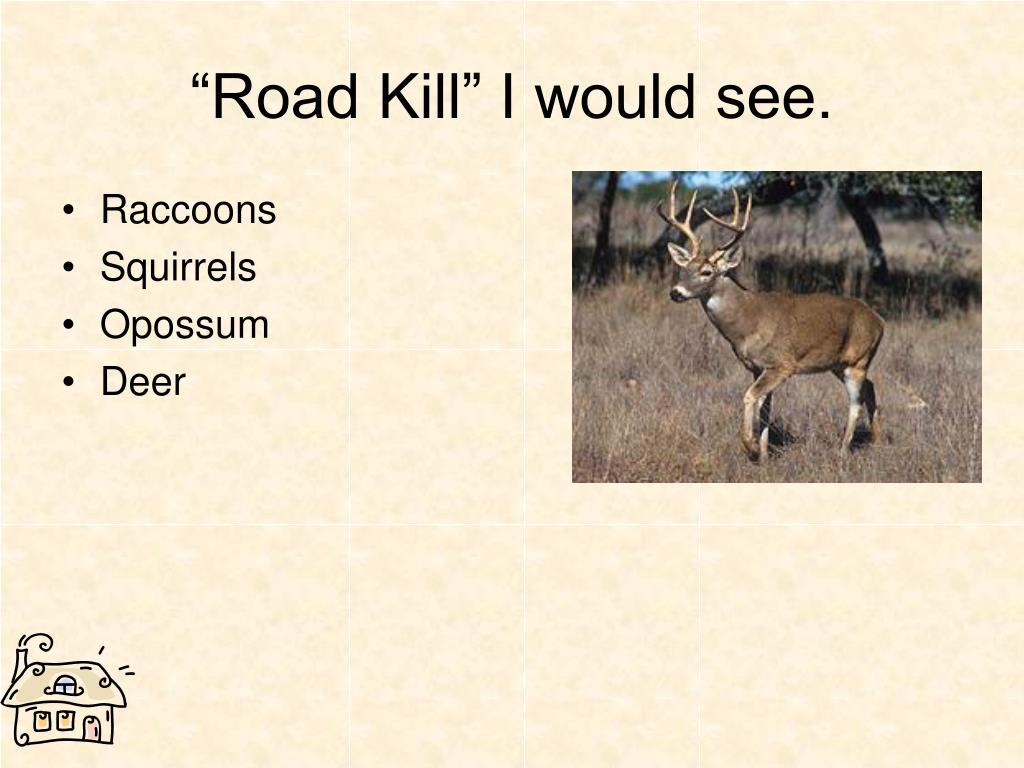 """""""Road Kill"""" I would see."""