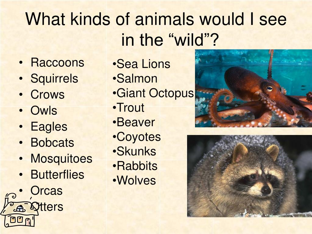 "What kinds of animals would I see in the ""wild""?"