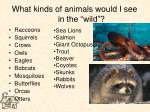 what kinds of animals would i see in the wild