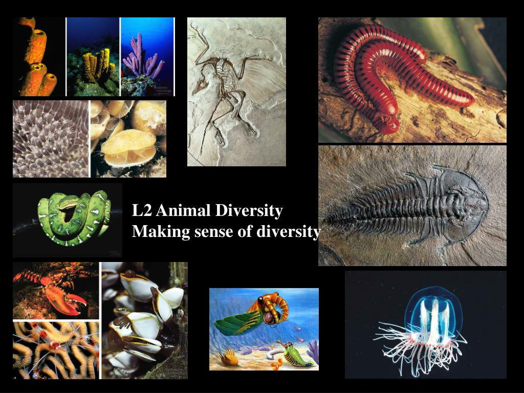 L2 Animal Diversity