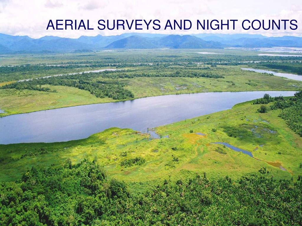 AERIAL SURVEYS AND NIGHT COUNTS