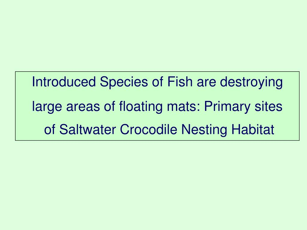 Introduced Species of Fish are destroying