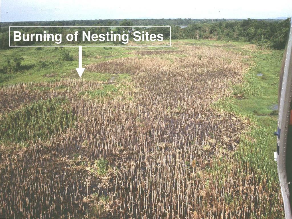 Burning of Nesting Sites