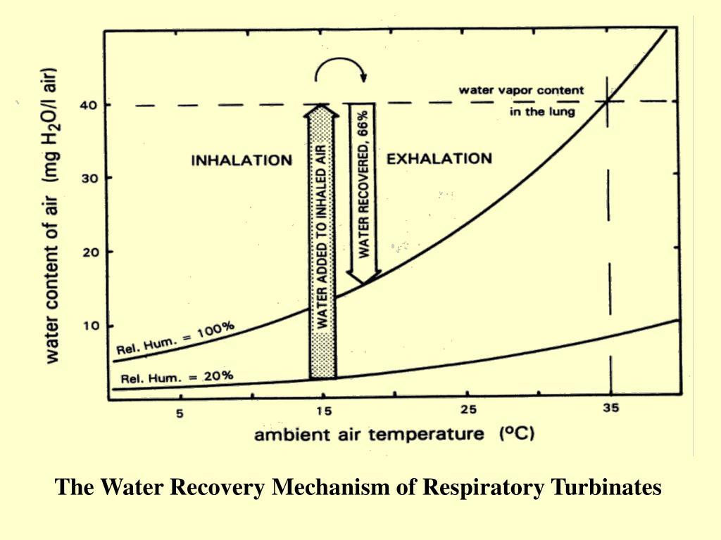 The Water Recovery Mechanism of Respiratory Turbinates