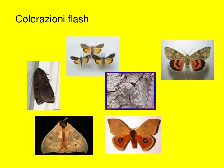 Colorazioni flash
