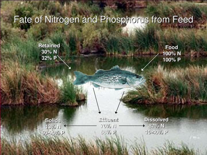 Fate of Nitrogen and Phosphorus from Feed