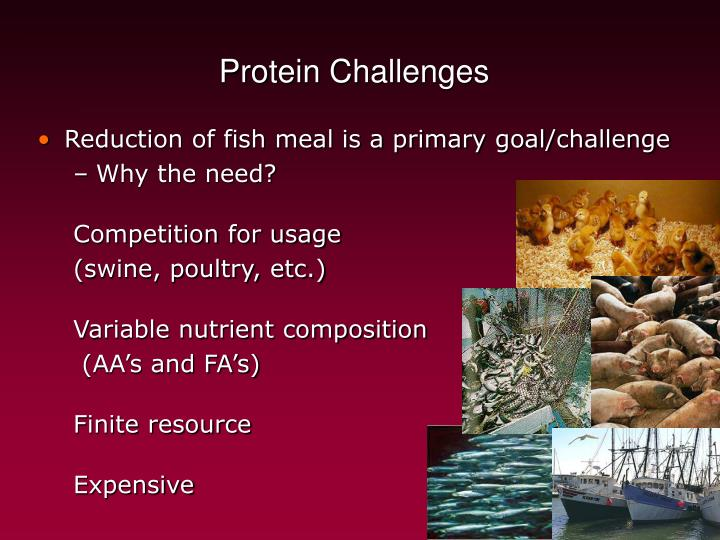 Protein Challenges
