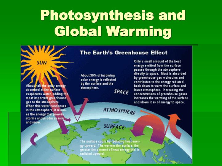 global warming and photosynthesis A comprehensive overview of global warming - its causes, its effects, its future, and what we can do about it, from aboutcom's expert geography site.