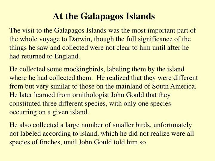 At the Galapagos Islands