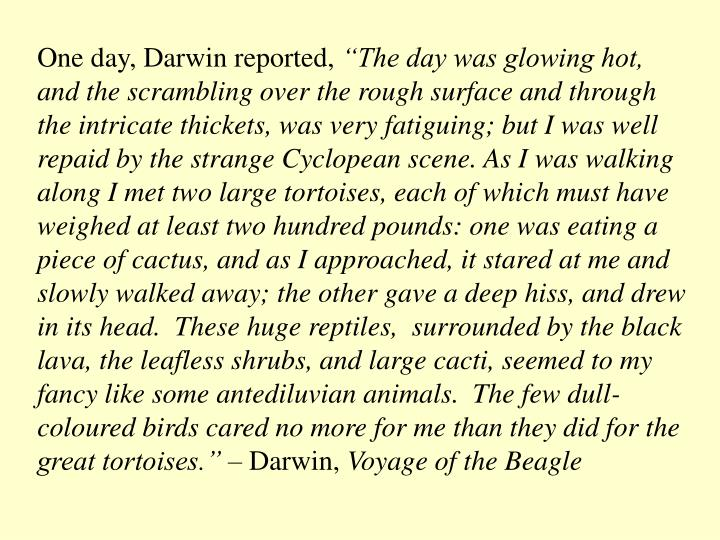 One day, Darwin reported,