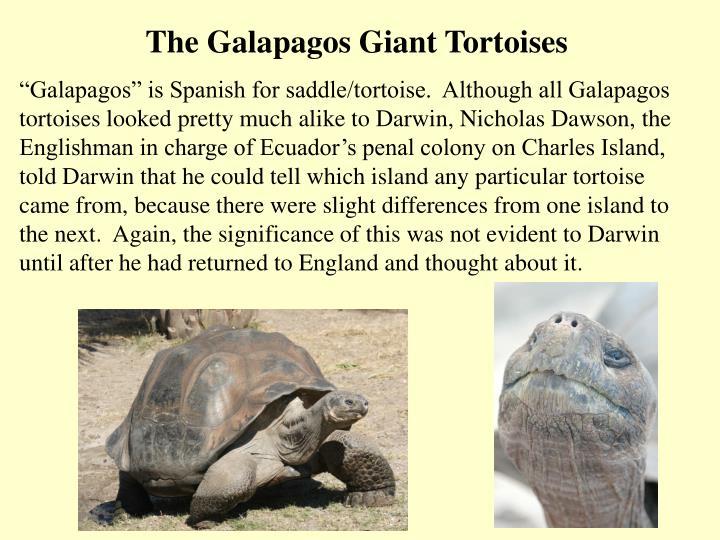 The Galapagos Giant Tortoises